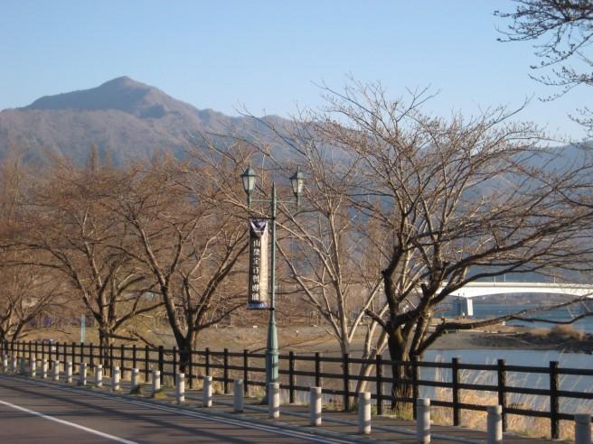 4月12日桜並木