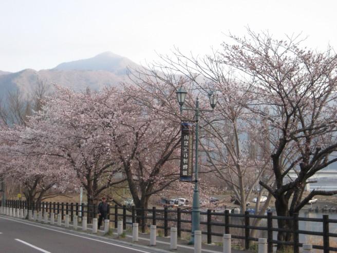 4月17日桜咲く・・!