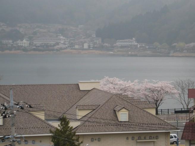 展望デッキからの桜
