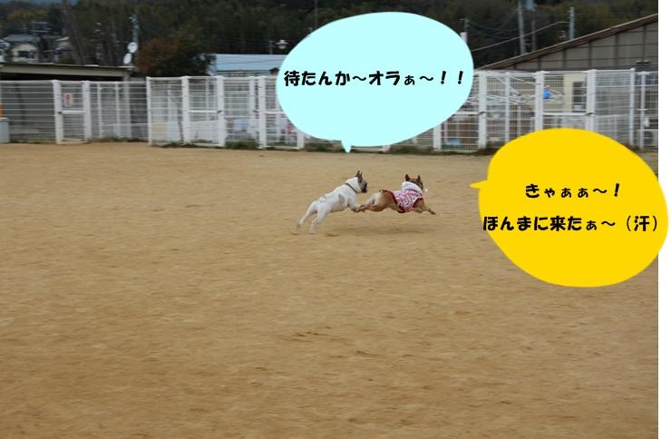 IMG_8327.jpg