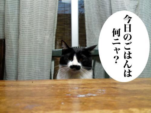 chobi_006.jpg