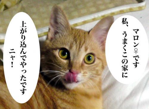 maron_001.jpg