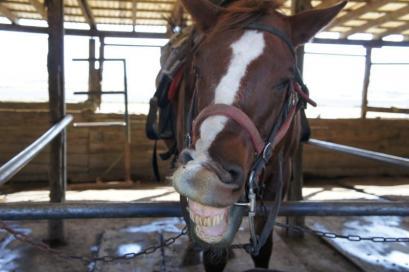 バーベQのあとは、お馬ちゃん達にもエサやり。