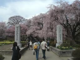 クライベイビー桜! (8)