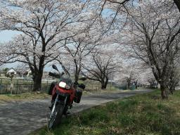 クライベイビー桜! (14)