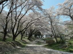 千本桜景厳 (12)