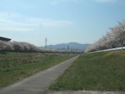 千本桜景厳 (10)