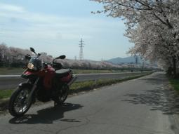 千本桜景厳 (8)