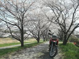千本桜景厳 (2)