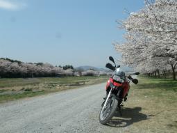 千本桜景厳 (1)