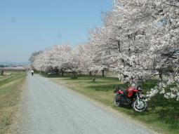 千本桜景厳