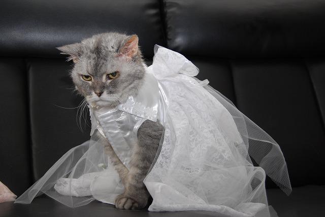 れンちゃんドレス姿