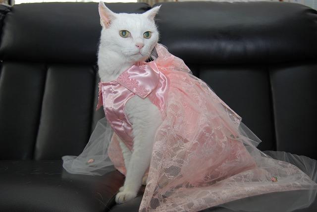 あいちゃんドレス姿