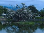 サギのいる池