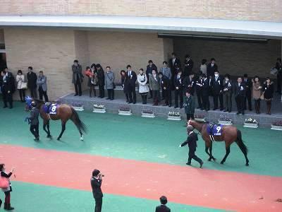 高松宮記念のパドック4
