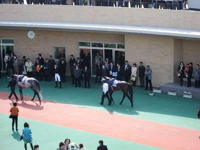 高松宮記念のパドック3