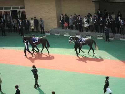 高松宮記念のパドック2