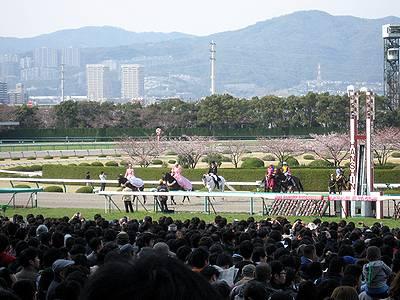 桜花賞出走馬の入場1