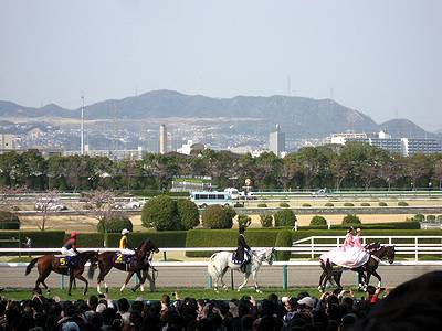 桜花賞出走馬の入場2
