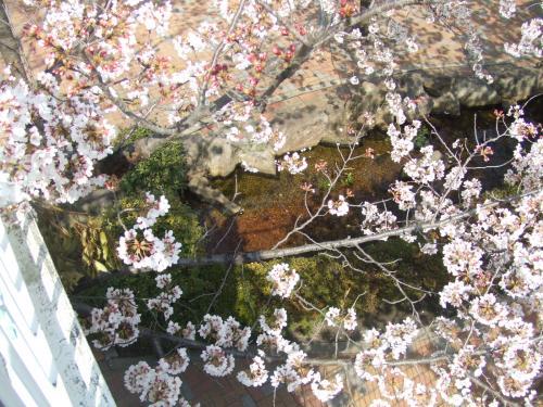 ガーデンズ池