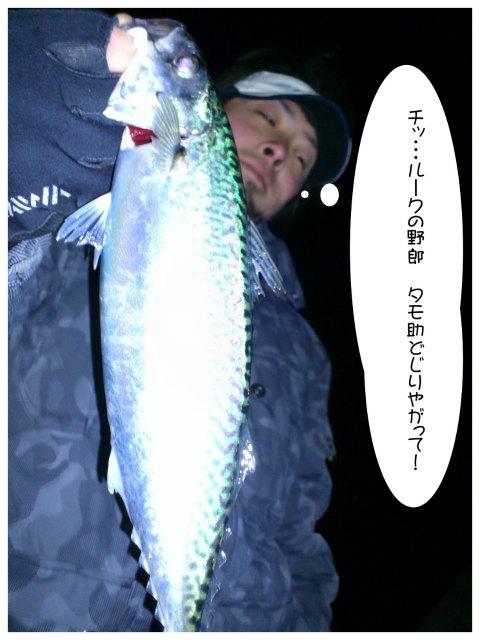 DSC_0336_20120409134007.jpg