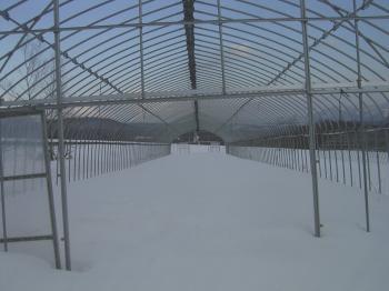冬の骨組みハウス