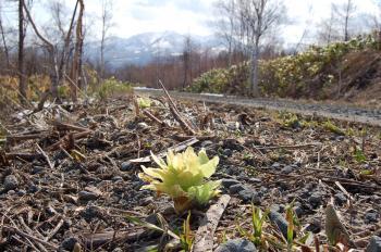 ふきと春の山並み