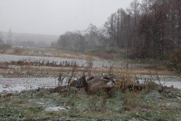 初雪の風景