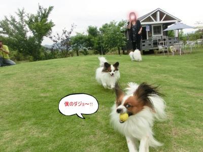 CIMG9138_20110612231532.jpg