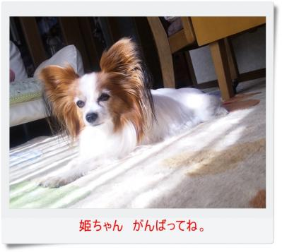 PAP_0035.jpg
