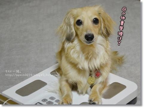 犬猫ドッグ2013 092