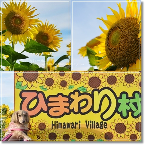 ひまわり村2013 3-1