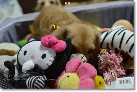 おもちゃとくるみ 012