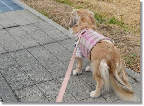 近所のお散歩 006
