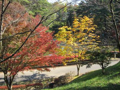 1110翠ヶ丘公園の紅葉1