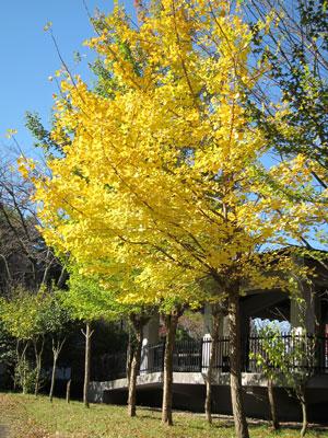 1110翠ヶ丘公園の紅葉2