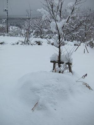 1201翌朝の雪景色