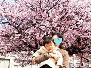 110326 枝垂れ桜02