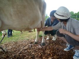 110730 牛の乳搾り体験