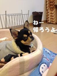 IMG_0361_convert_20120404183922.jpg
