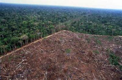 アマゾンの森林伐採