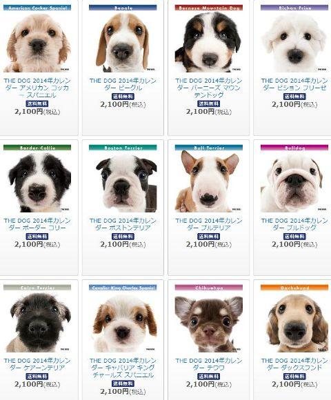 thedog2.jpg