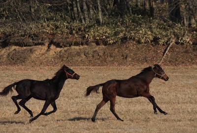 horse519