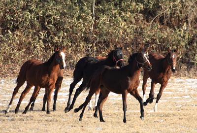 horse520