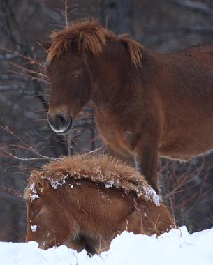 horse524