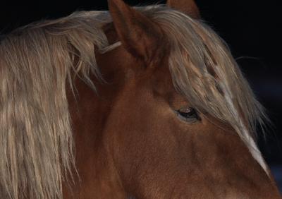 horse526