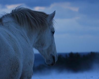 horse527