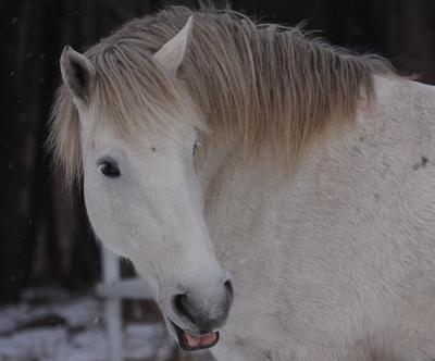 horse528