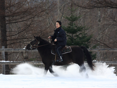 horse530