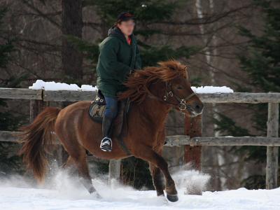 horse531